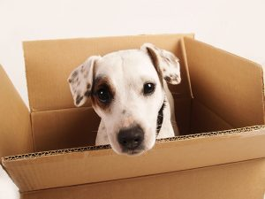 prepare your pet for the moving
