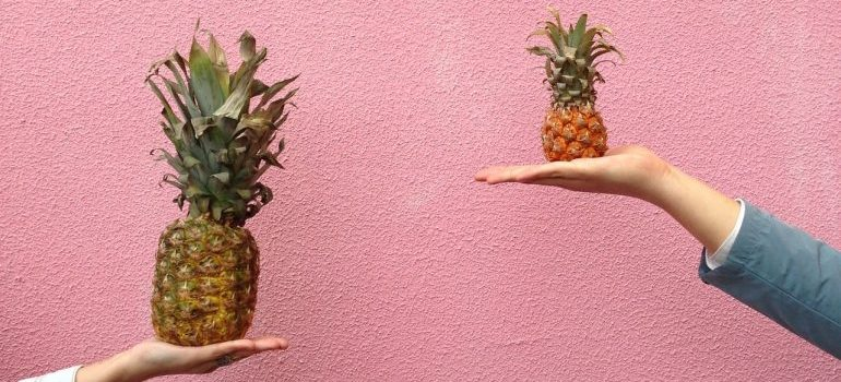 Pink wall and two hands holding one big and one small pineapple for comparation