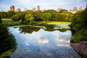 Things to Do in New York in October 2021 include walking around the park